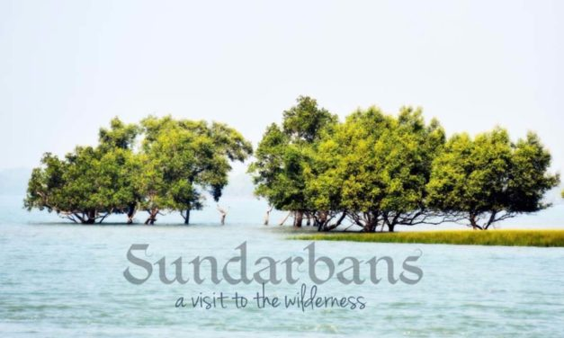 Sundarbans – a visit to the wilderness